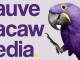 Mauve Macaw Media logo
