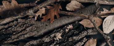An autumn one-click installer update